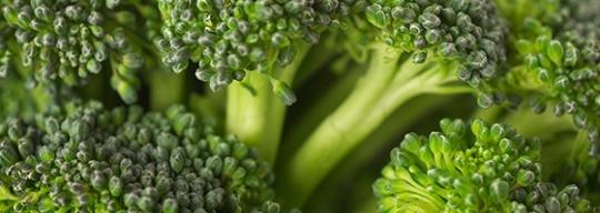 Broccoli_154948